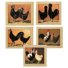 Antique original Color lithograph prints of Roosters,chicken,hen, set of 8 prints dates 1910