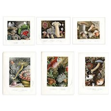19th Century hand colored Lithograph prints set of six all sea life related art of nature