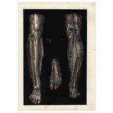 19th Century,Original,Antique,colored Lithograph,Human anatomy,Gorgeous Engraving 1860-1870,Superb Large Folio