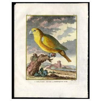 Set of two,18th century, Mascarin and Amazon Parrots ,dates 1749,Comte de Buffon,Hand-Colored Original print,