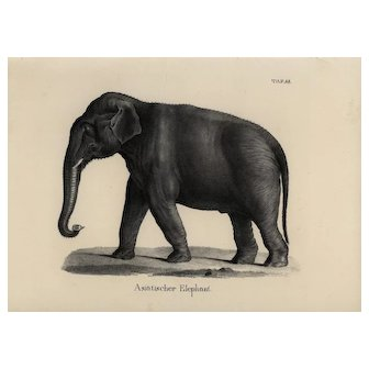 19th Century Authentic 1842 Natural History Print of Elephant black and white zoology print