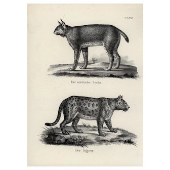 19th century,Authentic,1842,Natural History,Print of Jaguars,black and white,zoology print