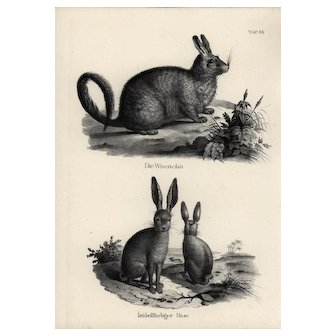 19th century,Authentic,1842,Natural History,Print of Rabbits,black and white,zoology print