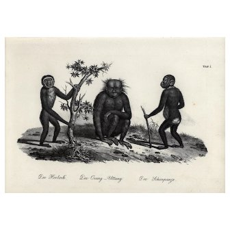 19th century,Authentic,1842,Natural History,Print of Apes,black and white,zoology print