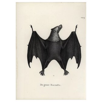 19th century,Authentic,1842,Natural History,Print of Bats,black and white,zoology print