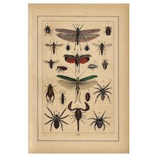 19th Century,original,antique,natural history prints of insects,hand colored,extremely rare,dragonflies,bees,spiders