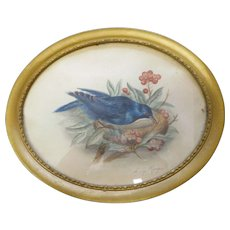 Circa 1890 oval framed 7 inches wide hand colored bird lithograph