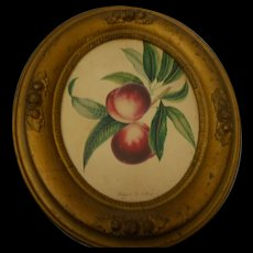 Victorian gesso oval picture frame wioth flower prnt circa 1890