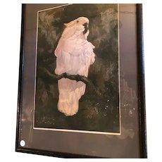 Cockatoo Lithograph by Adriamus Van T'Holt Dutch Antique c1910