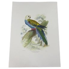 E. Lear's Pale Headed Broad-Tail Hand Coloured Re-Print c1994