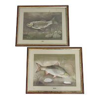 Two Framed Pastel Studies of Fish by A Gray Vintage