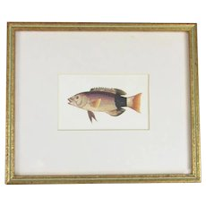 Framed Chromolithographic Print of a Fish Contemporary