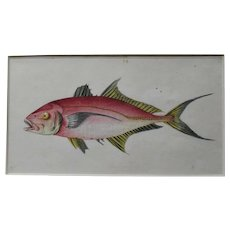 English Colour Fish Print Vintage c.1780.