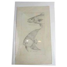 Original Fish Sketch Arthur Thomas Holloway Antique Victorian c1890