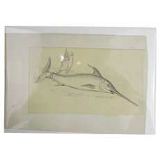 Original Sword Fish Sketch Arthur Thomas Holloway Antique Victorian c1890