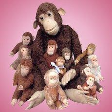 13 Steiff monkeys. 1 monkey is 36 inch tall!
