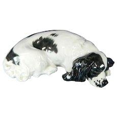 Antique First Class Meissen Porcelain Dog Rare Springer Spaniel Germany