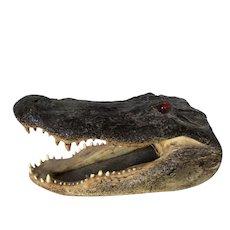 Very Large Alligator Head