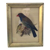 J. G. Keulmans lithograph Indian Broad -Billed Roller