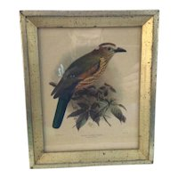 J.G. Keulemans Lithograph of Rufous Crowned Roller Framed by Borghese