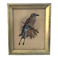 J.G.Keulemans Lithograph of Coracias Spatulatus framed by Borghese