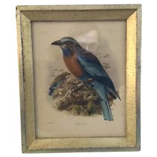 J.G. Keulemans Lithograph of Burmese Roller framed by Borghese