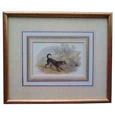 Framed vintage print of a dog (Scotch terrier) chasing a skunk