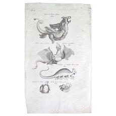 """Engraved Plate from """"Historiae Naturalis de Serpentibus"""", 1700s"""