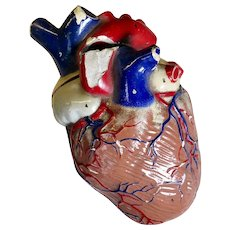 Large Heart Anatomical Model, Early 1900s