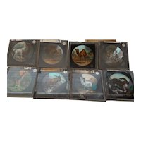 Victorian Magic Lantern Glass Plates  x 8  -  ANIMALS