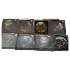 Victorian Magic Lantern Glass Plates  x 8  -  ANIMALS