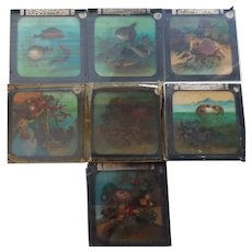 Victorian Magic Lantern Glass Plates - 9 x   FISH Series