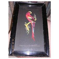 """Gorgeous Antique Feather Art  """"Parrot Picture"""" Circa 1700-1800"""