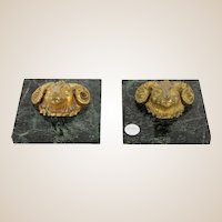 PAIR of Bronze Rams' Heads Paperweights - Gilt Bronze on Marble Base