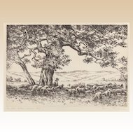 "HANS KLEIBER  (German/American 1887 - 1967) - Artist Signed and Titled Etching ""The Old Cotton Wood Tree"""
