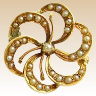 Small and Sentimental - Seed Pearls In 10 Karat Gold  Pin/Brooch In A Pin Wheel or Flower Shape.