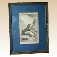 """Antique Framed Book Plate Engraving Of Seals (toned),   """"L'ours Marin"""""""