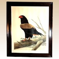 "John Ruthven (American 1924-) ""Bateleur Eagle"" Double Signed Limited Edition - C 1978 - from Larry Hagman's Estate"