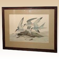 """JOHN RUTHVEN (American b. 1924) - """"Common Terns""""  Limited Edition, Signed/numbered, From Larry Hagman's Estate"""