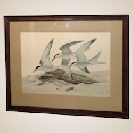 "JOHN RUTHVEN (American b. 1924) - ""Common Terns""  Limited Edition, Signed/numbered, From Larry Hagman's Estate"
