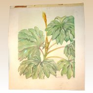 ROY KEISTER  (1886-1983) Original Watercolor - Leaves""