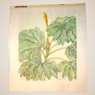 "ROY KEISTER  (1886-1983) Original Watercolor - Leaves"""