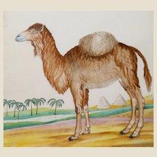 "William Goodall (English 1757 - 1844) -  Original Signed Antique Watercolor - ""Dromedary Camel"""