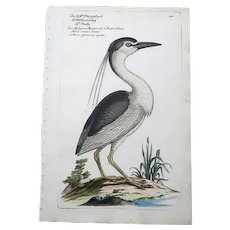 "RARE !8th Century First Edition Engraving ""Heron"" by Johann Leonhard Frisch, circa 1733-1763"
