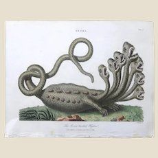 """John Wilkes (British, 1750 – March 31, 1810) """"Seven-Headed Hydra"""" -From The Encyclopaedia Londinensis, The Universal Dictionary of Arts, Sciences, and Literature, Circa First Quarter of The 19th Century,"""