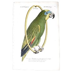 18th Century:   Johann Leonhard Frisch (German 1666-1743) - First Edition, Original Hand-Colored Engraving On Chain-Linked Watermarked Paper - Considered The First Great Bird German Book