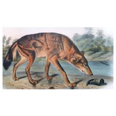 Antique First Edition Hand-Colored Lithograph Red Texan Wolf (No. 17, Plate LXXXIL) After John James Audubon (American, 1785-1851) -from The Viviparous Quadrupeds of North America, 1849-