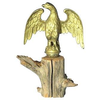 Vintage Eagle Trophy Resting on Drift Wood