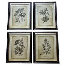 Four Black and White Floral Pen and Ink Drawings