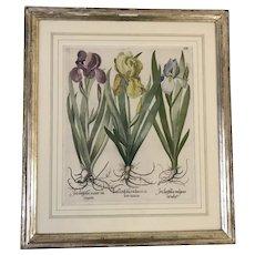 Basilius Besler (1561-1629) Antique 17th Iris / Flowers Hand Colored Engraving